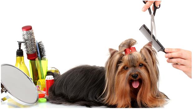 pet grooming service benefits